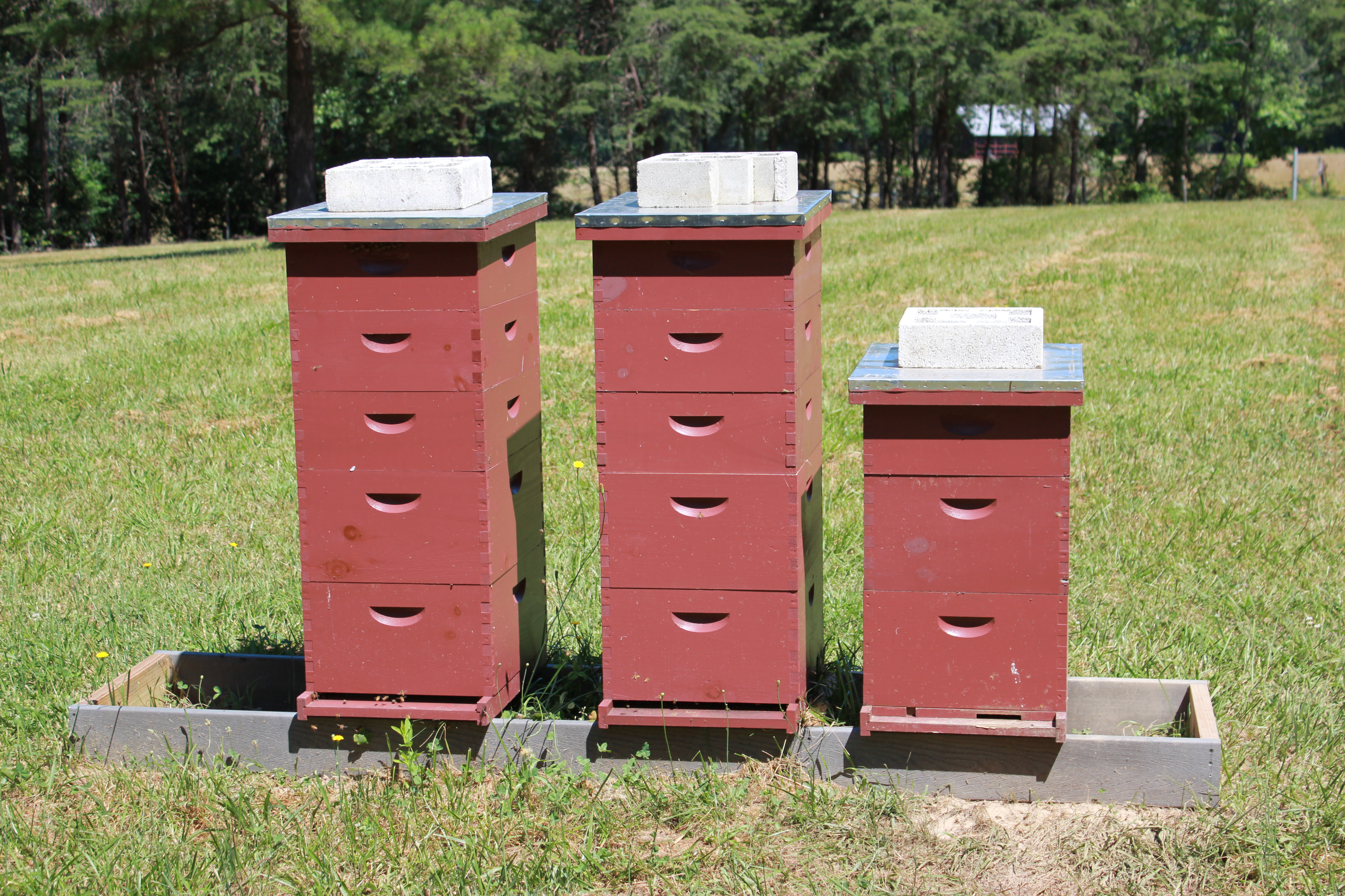 how to northeast new jersey beekeepers association