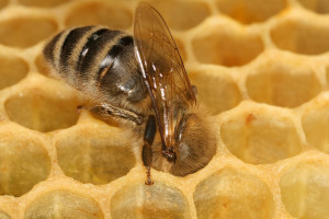 worker_honeycomb_2